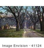 #41124 Stock Photo Of A Tree Lined Dirt Road Through The Hermitage In Savannah Georgia