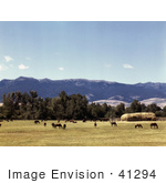#41294 Stock Photo Of Horses Grazing On A Ranch In Grant County Oregon July Of 1942
