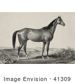 #41309 Stock Illustration Of A Strong Horse Standing And Facing To The Right