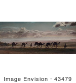#43479 Rf Stock Photo Of A Caravan Of Camels On Mount Of Olives Jerusalem
