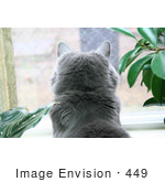 #449 Photograph Of A Cat In A Window