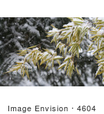 #4604 Bamboo and Blue Spruce in Snow by Jamie Voetsch