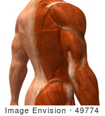 #49774 Royalty-Free (RF) Illustration Of A 3d Closeup Of A Human Man's Back and Arm Muscles - Version 2 by Julos