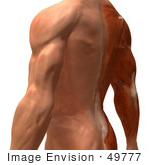 #49777 Royalty-Free (RF) Illustration Of A 3d Closeup Of A Human Man's Back and Arm Muscles - Version 3 by Julos