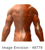 #49779 Royalty-Free (Rf) Illustration Of A 3d Closeup Of A Muscle Male Body Back - Version 1