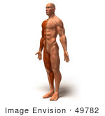 #49782 Royalty-Free (RF) Illustration Of A 3d Muscle Male Body Facing Left - Version 3 by Julos