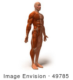#49785 Royalty-Free (RF) Illustration Of A 3d Muscle Male Body Facing Right - Version 4 by Julos