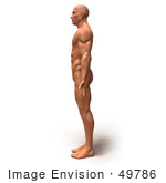 #49786 Royalty-Free (RF) Illustration Of A 3d Muscle Male Body Facing Left - Version 4 by Julos