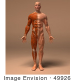#49926 Royalty-Free (RF) Illustration Of A 3d Human Body Muscle Tissue Facing Front - Version 2 by Julos