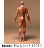 #49932 Royalty-Free (RF) Illustration Of A 3d Human Body Muscle Tissue Facing Away - Version 1 by Julos