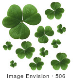 #506 Photograph of Clover Leaves on a White Background by Jamie Voetsch