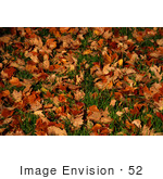 #52 Picture of Fallen Maple Tree Leaves On Grass by Kenny Adams
