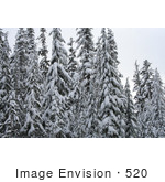 #520 Photo of Snow Covered Trees, Rogue River National Forest by Jamie Voetsch
