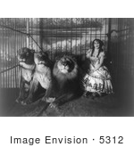 #5312 Adgie in Cage With 3 Lions by JVPD