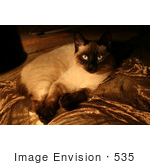 #535 Picture Of A Siamese Cat Laying Down