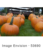 #53690 Royalty-Free Stock Photo Of Pumpkins In Field 1