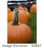 #53697 Royalty-Free Stock Photo Of Pumpkin In Field 2