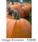 #53698 Royalty-Free Stock Photo Of Pumpkin In Field 6