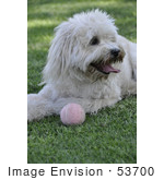 #53700 Royalty-Free Stock Photo Of Dog With Ball