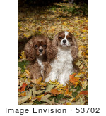 #53702 Royalty-Free Stock Photo Of Cavaliers Autumn Leaves