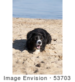 #53703 Royalty-Free Stock Photo Of Dog Portrait