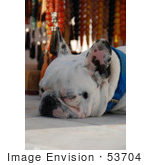 #53704 Royalty-Free Stock Photo Of A Resting Dog