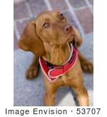 #53707 Royalty-Free Stock Photo Of An Alert Dog