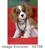 #53708 Royalty-Free Stock Photo Of A Cute Spaniel Wearing Colorful Pearls