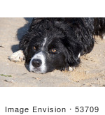 #53709 Royalty-Free Stock Photo Of Dog Landscape