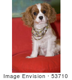 #53710 Royalty-Free Stock Photo Of A Spaniel Wearing Colorful Pearls