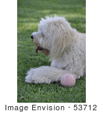 #53712 Royalty-Free Stock Photo Of Dog With Ball