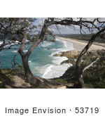 #53719 Royalty-Free Stock Photo Of A Beach Tree