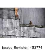 #53776 Royalty-Free Stock Photo Of A Squirrel On A Weathered Ledge