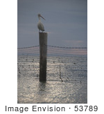 #53789 Royalty-Free Stock Photo Of A Pelican On A Beach Post
