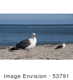 #53791 Royalty-Free Stock Photo Of A Seagull Landscape