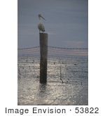 #53822 Royalty-Free Stock Photo Of A Lone Pelican