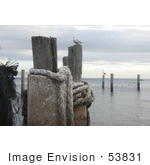 #53831 Royalty-Free Stock Photo Of A Gull On A Beach Post