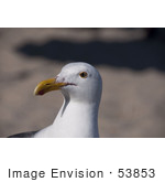 #53853 Royalty-Free Stock Photo Of A Seagull Head