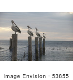 #53855 Royalty-Free Stock Photo Of A Row Of Pelicans On Posts