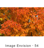 #54 Photo Of Orange Fall Colors