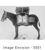 #5501 Pack Horse