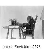 #5578 Chimpanzee Using Typewriter by JVPD