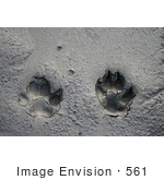 #561 Photograph of Dog Paw Prints in the Mud by Jamie Voetsch