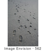 #562 Image of Human and Dog Paw Prints in the Mud by Jamie Voetsch