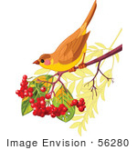 #56280 Royalty-Free (Rf) Clip Artillustration Of An Autumn Bird Perched On A Branch With Berries