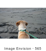 #565 Photograph Of A Dog On A Leash