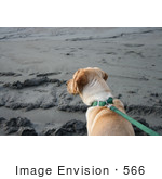 #566 Photograph Of A Dog On A Leash