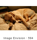 #594 Image Of A Dog Sleeping On A Couch