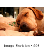 #596 Photograph Of A Sleeping Dog