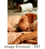 #597 Photo Of A Yellow Lab Dog Sound Asleep On A Couch